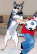 Bad Dog Behavior - Dog Jumping on Child - www.petconvincer.com